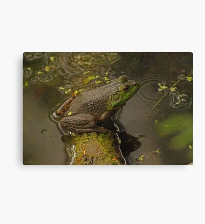 Frog September Canvas Print