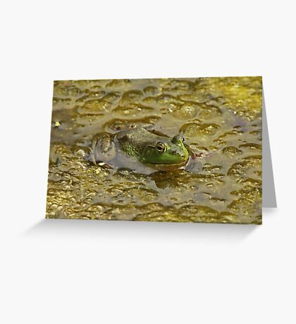 Frog October Greeting Card