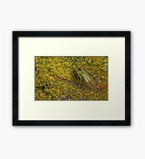 Frog November Framed Print