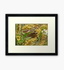 Frog August Framed Print