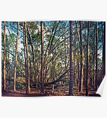 The Split Oak. Poster