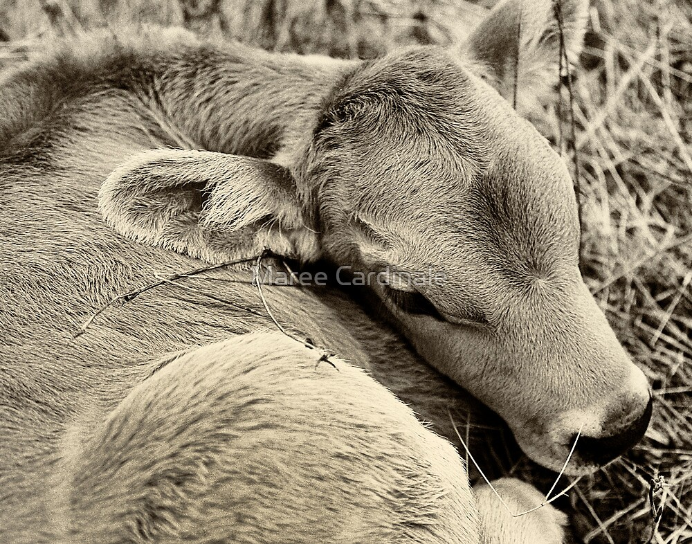 Soft soft baby by Maree Cardinale