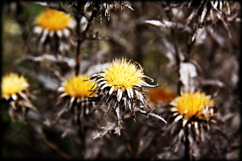 Wild Yellow Flowers by playfulkit