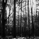 Through the Trees by Zen-Art (Zenith)