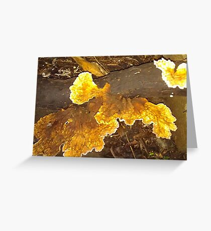 Fungi in my rainforest garden Greeting Card