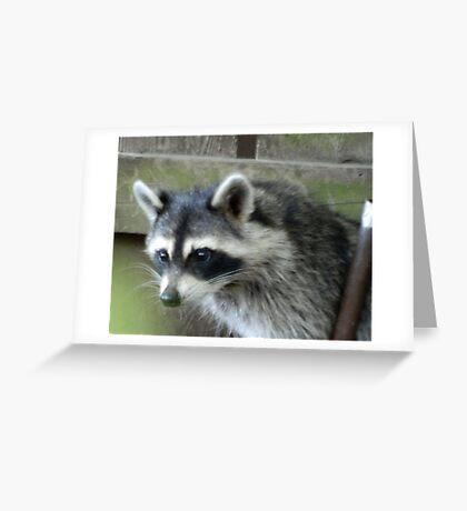 Raccoon Greeting Card