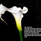 Lily of the field by Irene  van Vuuren