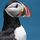 Atlantic Puffin by naturalnomad