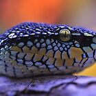 Waglers Viper by Dennis Stewart
