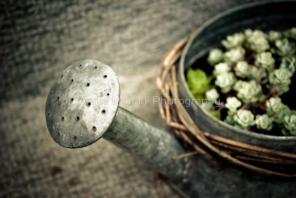 Mother's Garden Magic by Annie Lemay  Photography