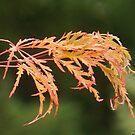 Autumn splendor by Rainydayphotos