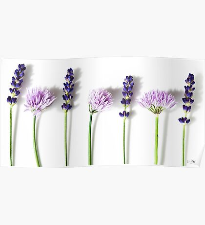 Lavender and Chives Poster