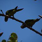Cuckoo Cuckoo - We Are Here... - Cuco Cuco - Estamos Aqui... by Bernhard Matejka