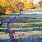 October morning by Tamara Travers