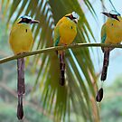 Three Amigos by John Absher