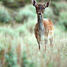 Fallow Deer dama dama case by shelfpublisher