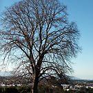 Lone winter tree - Warragul, Sth East Australia by Bev Pascoe