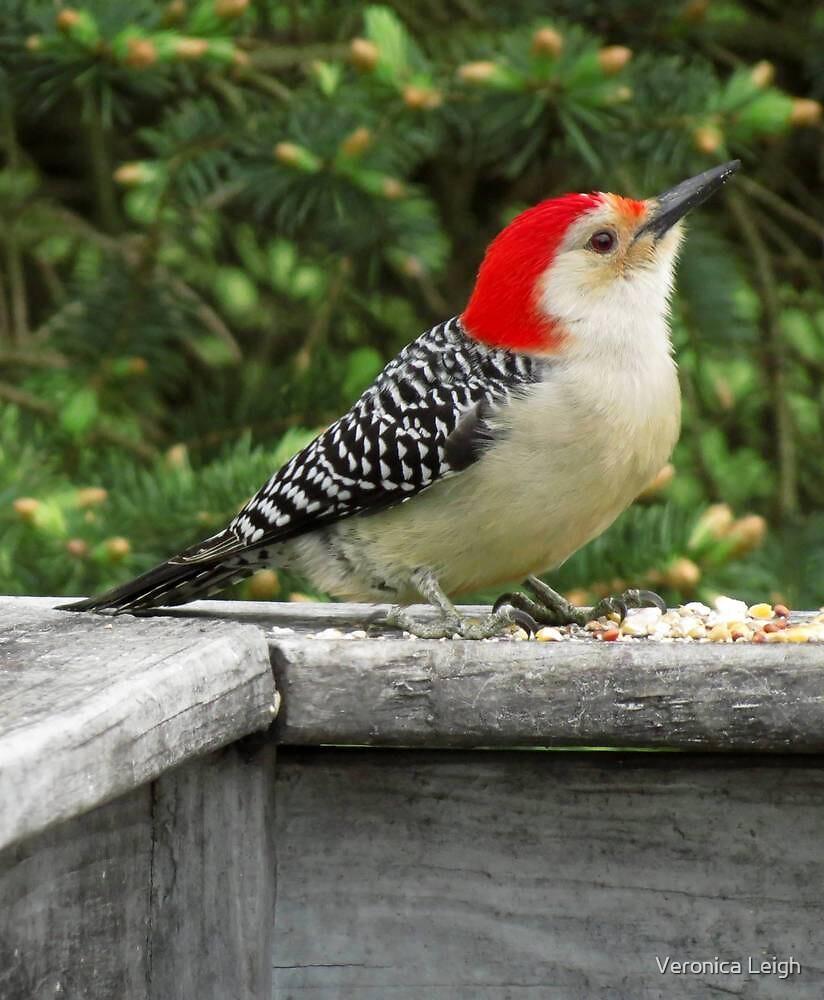 Woodpecker by Veronica Schultz