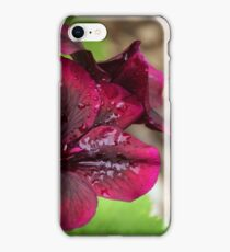 Small dark red geranium flower with raindrops Leith Park Victoria 20151022 0468  iPhone Case/Skin
