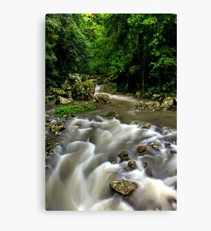 Cave Creek - Springbrook National Park Canvas Print
