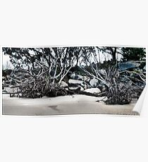 Fallen trees at the beach Poster