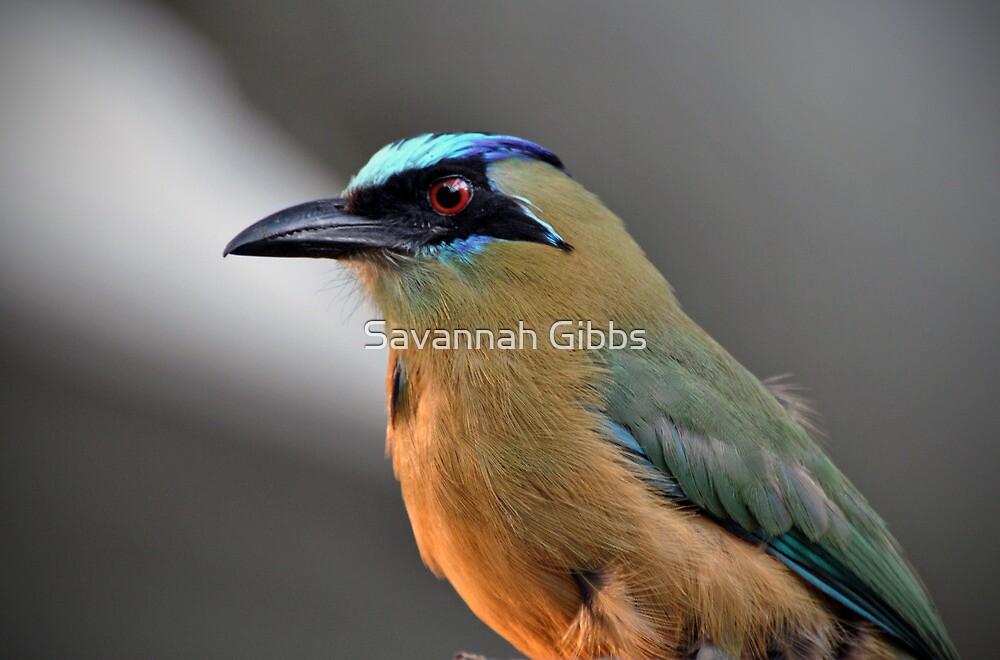 Fairy-Bluebird by Savannah Gibbs