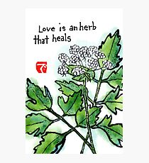 Lovage (the Herb Series) Photographic Print