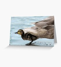 Duck Tails Greeting Card