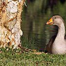 Goosey, goosey, gander by Joy Rensch