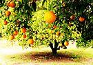 Orange Tree by Marianna Tankelevich