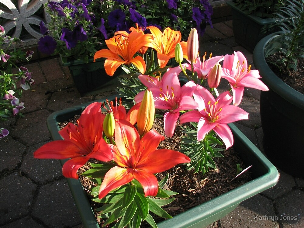 Lilies Soaking Up The Sunshine by Kathryn Jones