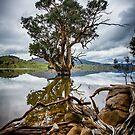 Storm Tree by David Haworth