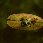 ON A LILLY PAD by Sandy Stewart