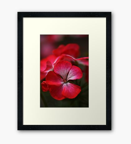 Happy Bright Geranium Framed Print
