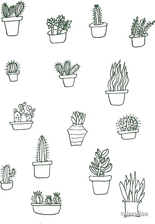 Succulents by tylerelise