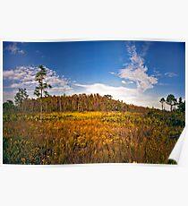 Cypress Dome & Black-Eyed Susans. Three Lakes W.M.A. Poster