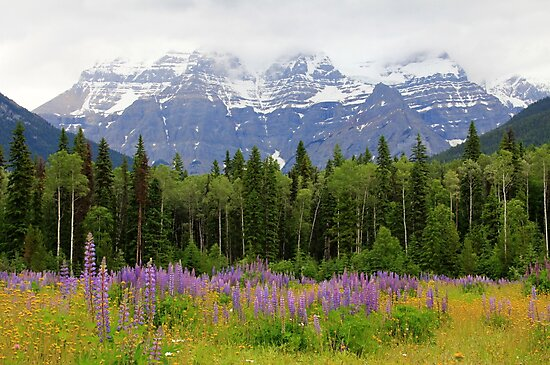 Mount Robson by Tracy Friesen