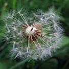 Make A Wish by Greta  McLaughlin