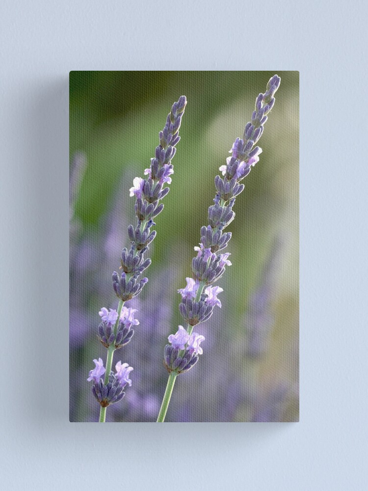 Alternate view of provence couple Canvas Print
