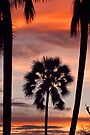 Swaying palms by Explorations Africa Dan MacKenzie