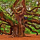 Angel Oak 2 by Miles Moody