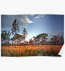 Sand Pine & Palmetto. Three Lakes W.M.A. Poster