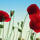 Poppy Power by J J  Everson