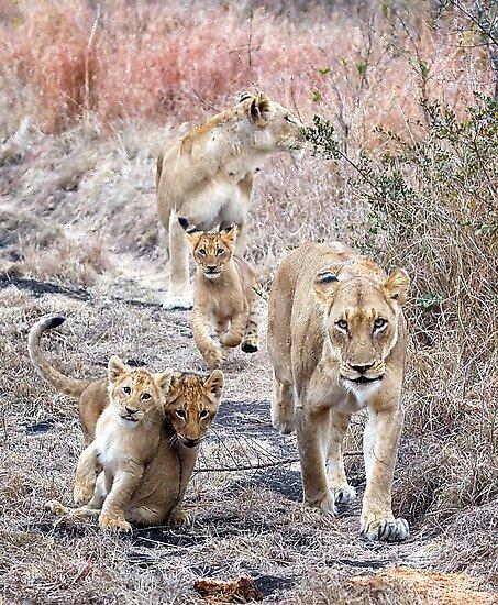 Family Walk by Michael  Moss