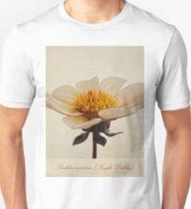 Dahlia coccinea (Single Dahlia) T-Shirt