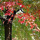 Tree of Many Brilliant Colors, New Milford NJ by Jane Neill-Hancock
