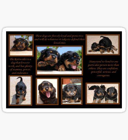Rottweiler Memories Sticker