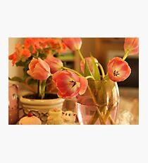 soft warm colours Photographic Print