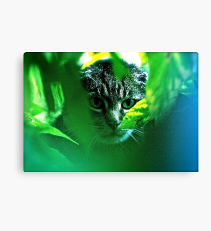 My   F   A   V   O   R   I   T   S  !   Warrior Cats Theme Songs  . by Brown Sugar . Tribute to Wild World - Cat Stevens . VIEWS 3364. Featured . MYSTERIES OF THE PAST AND PRESENT . Has been sold. Canvas Print