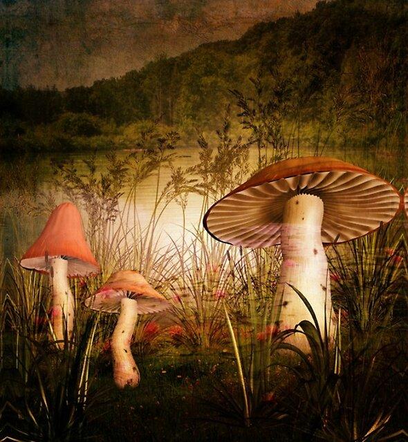 Wandering in Delight by Pamela Phelps